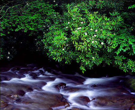 Oconaluftee River in Spring, Great Smokey Mountains National Park