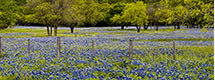 Hill Country Bluebonnets Panorama, TX