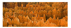 Hoodoos Panorama in Golden Light, Bryce Canyon National Park, UT
