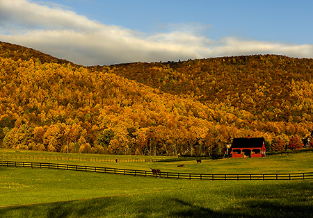 Nelson County Horsefarm in Fall, VA