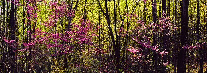 Early Spring Panorama, Albemarle County, VA